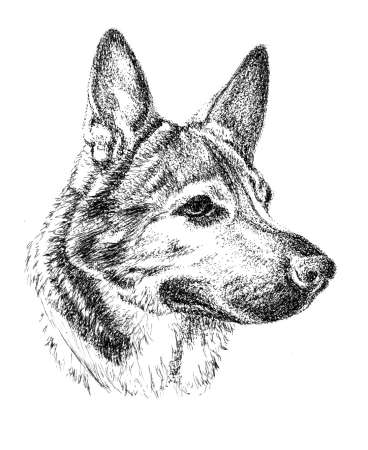pen and ink dog portraits